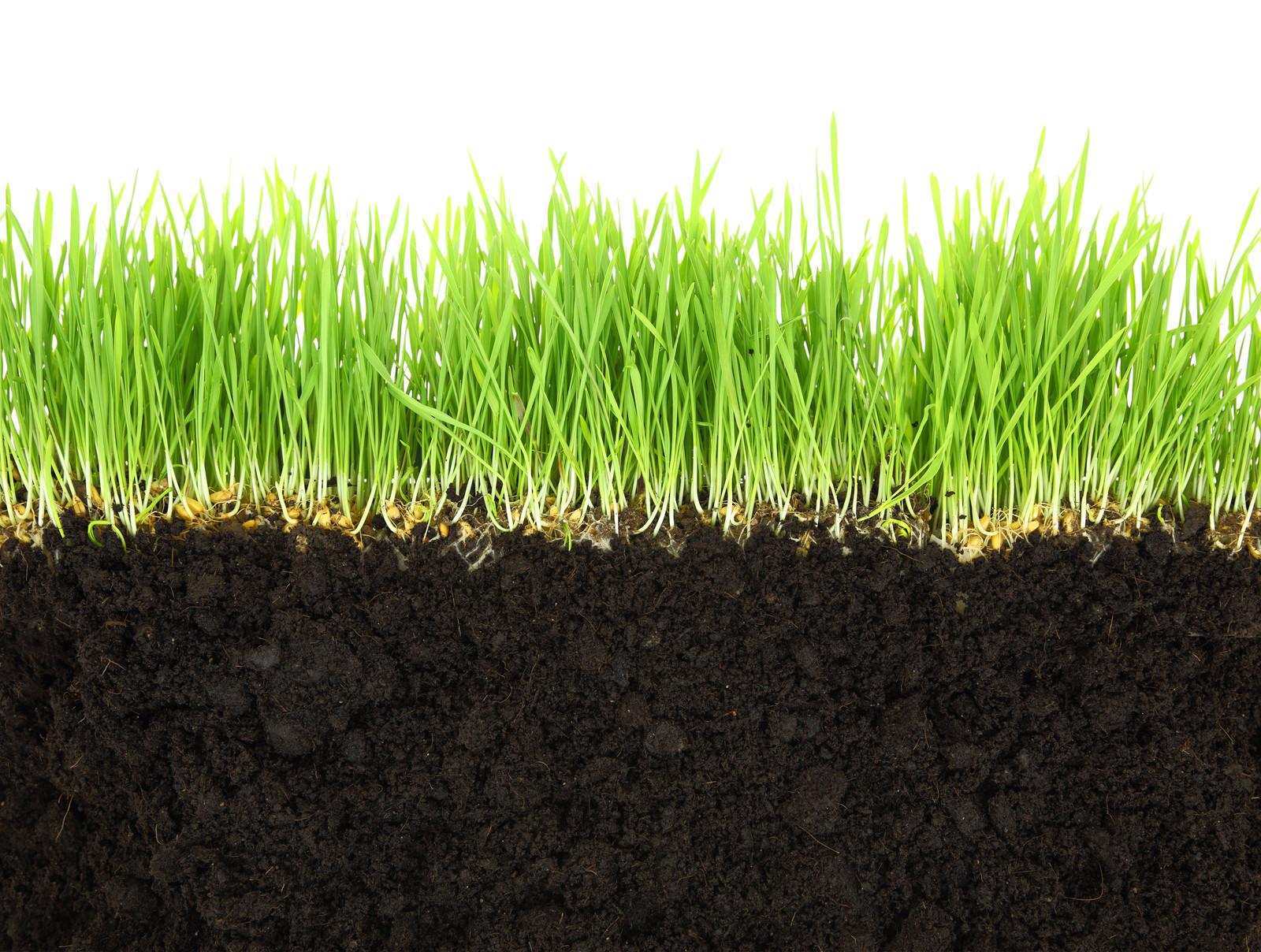 Details kensington lawns for Soil xat cut off